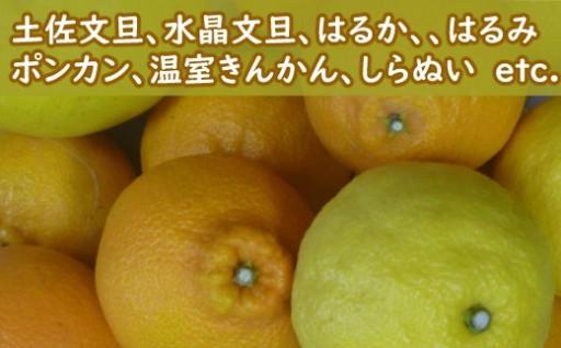 旬の室戸産柑橘食べ比べセットはいかがですか??