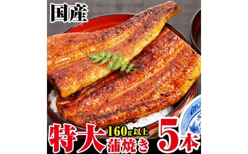 肉厚でジューシーな特大サイズの国産うなぎ蒲焼の5本セット!