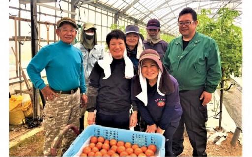 東村で採れたリコピンたっぷり『ぜいたくトマト』をお届け!