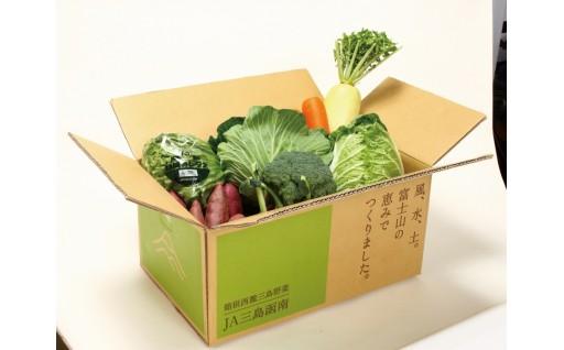 要先行予約 箱根西麓三島野菜 詰め合わせセット