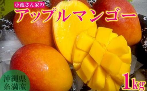 沖縄県糸満市産 小池さん家のアップルマンゴー1kg