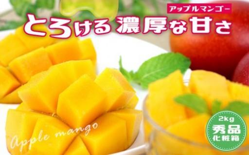 北中城村産マンゴー 4玉~6玉(約2kg)【化粧箱・秀品】