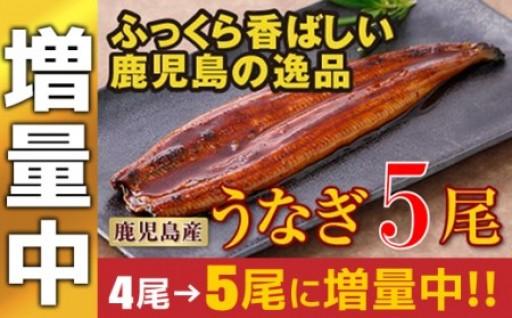 【増量中】鹿児島産特上うなぎ5尾!