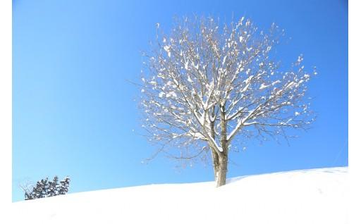 雪の季節を終えて、新しいお米作りがスターとします!