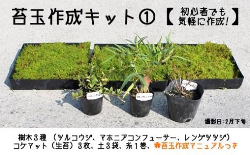 初心者でも気軽に作れる★コケ玉作成キット①【原種苗園】