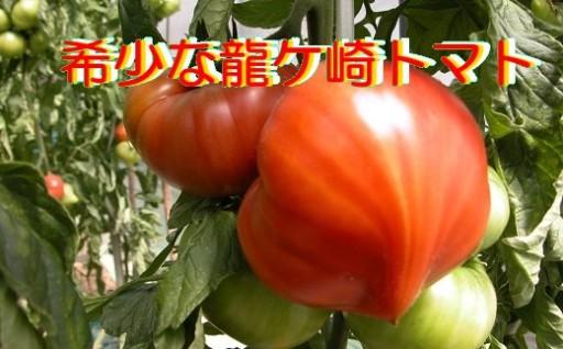 今が最盛期です。果肉たっぷりの「龍ケ崎トマト」
