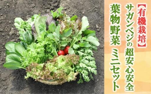 ★有機栽培★サガンベジの超安心安全「葉物野菜・ミニセット」