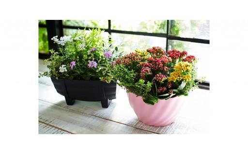 6ヵ月間 毎月つづく 花のある生活  季節のお花セット♪