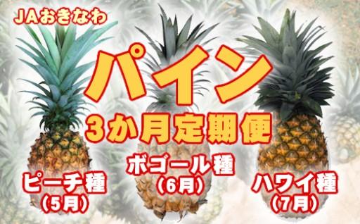 石垣島からパインの定期便【締切間近!】