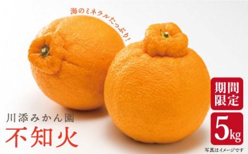 【限定25個!】川添みかん園の不知火(しらぬい)5kg