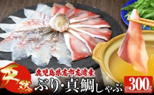 【プリプリ】絶品!志布志湾産 ブリしゃぶ・鯛しゃぶ