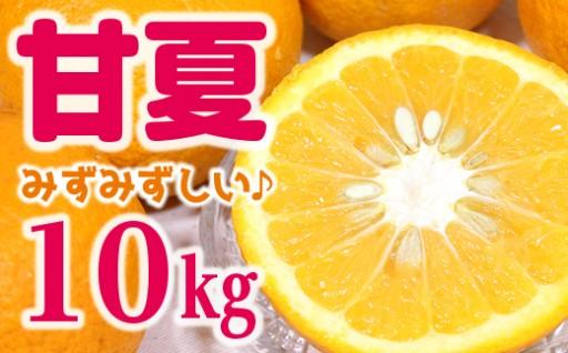 【すっきり!みずみずしい!】庄右衛門の甘夏10kg
