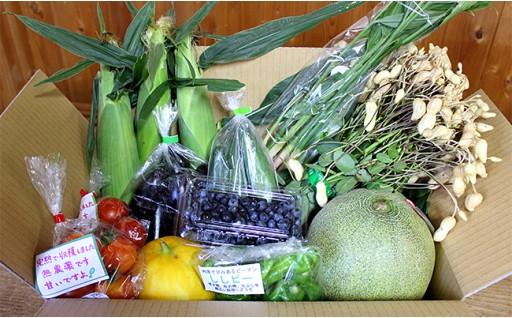【定期便・計6回】新鮮野菜が毎月届く!高倉直売所野菜BOX!
