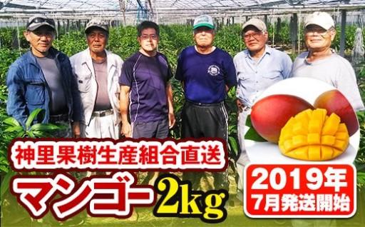 神里果樹生産組合直送マンゴー2kg(2019年7月発送開始)