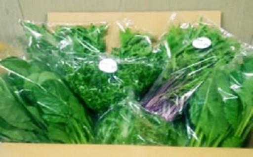 水耕栽培の葉物野菜