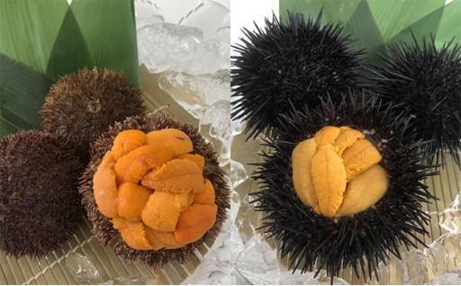生うに食べ比べセット(ばふんうに・むらさきうに) 北海道産