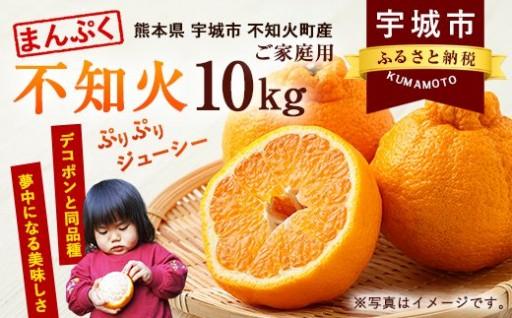 まんぷく不知火(家庭用) 約10kg