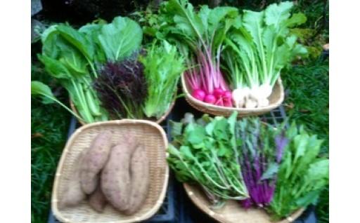 固定種野菜セット