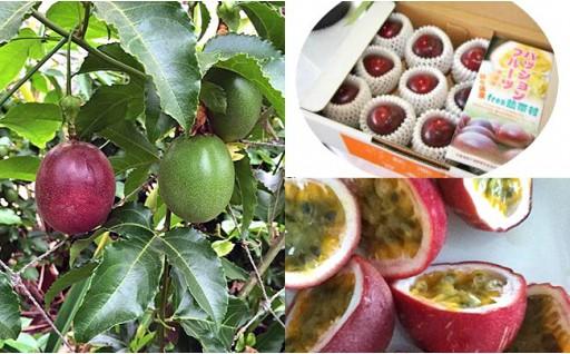 熱帯村 パッションフルーツ生果 24個セット