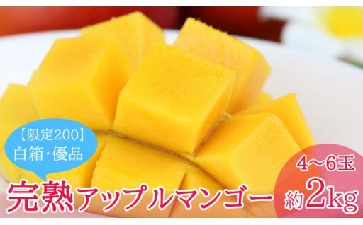 沖縄市【限定200】完熟アップルマンゴー約2kg 白箱・優品
