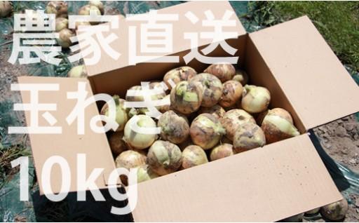 農家さん直送タマネギ!使いやすいMサイズ(10kg)