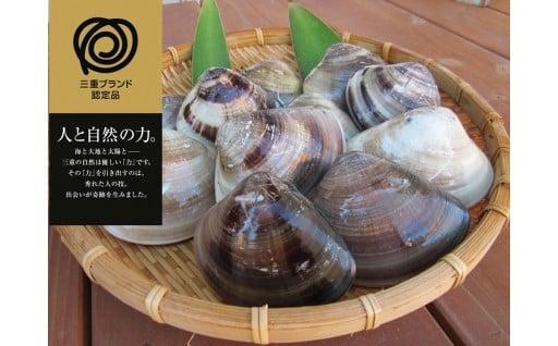 桑名産蛤(ハマグリ)0.9kg