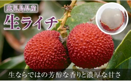 鹿児島産 温泉★生ライチ500g