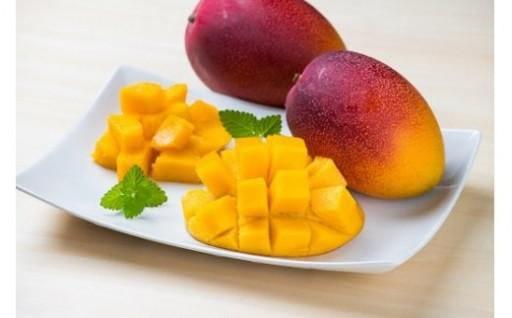 感動のとろける甘さ!大人気のマンゴー