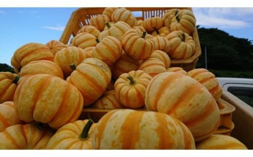 【満天★青空レストラン放送】レンチンだけで食べられるかぼちゃ