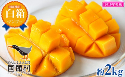 国頭村産マンゴー 白箱 3玉~6玉入り(約2Kg)