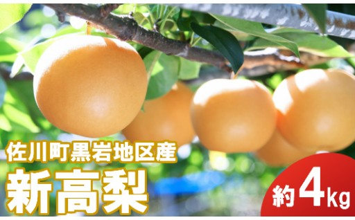 1玉1kg越?大きさ・美味しさ・値段の三大びっくりが揃う梨!