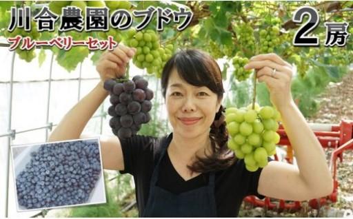 減農薬 川合農園のブドウ おまかせ2房 とブルーベリーセット