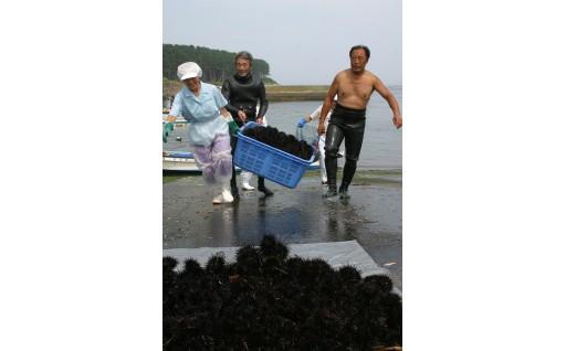 大好評「種市産」生ウニ。いよいよ今季の漁が始まりました!