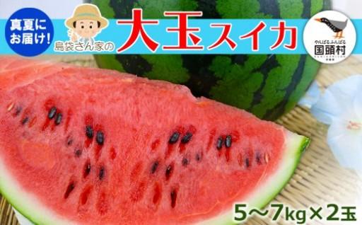 8月発送! 国頭マージ 赤土「大玉夏スイカ」2玉x5~7kg