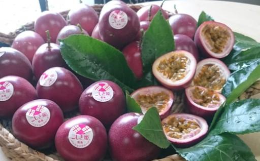 旬の甘酸っぱい果実【パッションフルーツ】こしき姫