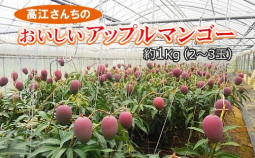 高江さんちのおいしい完熟アップルマンゴー(約1Kg2~3玉)