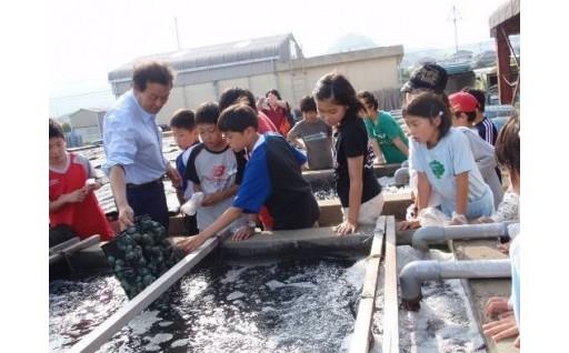 夏休みの自由研究をお助け!アワビの生態と水産業を知ろう