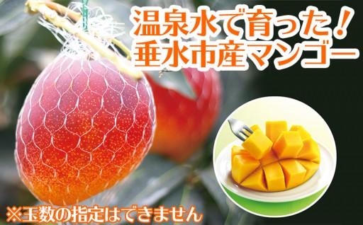 まもなく受付終了!天然温泉水【財宝】で栽培超旨!完熟マンゴー