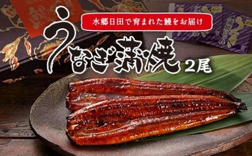 鰻蒲焼2尾セット