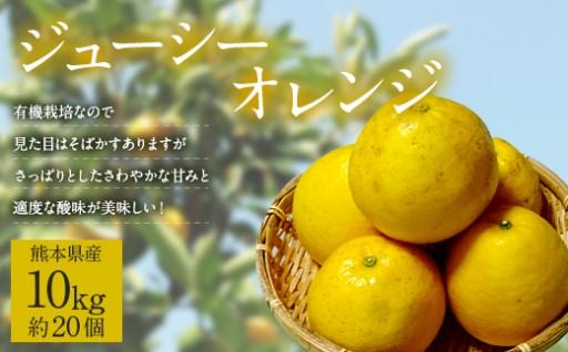 熊本県産 ジューシーオレンジ 10kg(約20個)