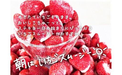 暑い夏に!北海道栗山町産🍓甘酸っぱい冷凍いちご🍓