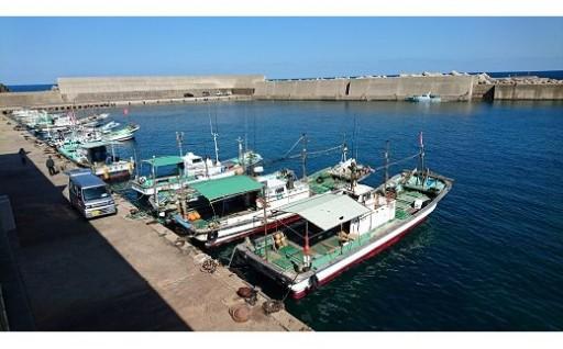 天然釣りレンコ鯛(下処理済)