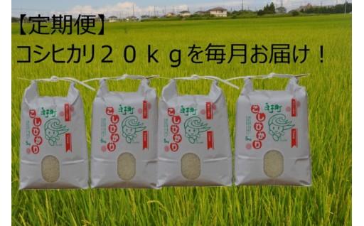 【千葉県白子町】コシヒカリ20kgの定期便