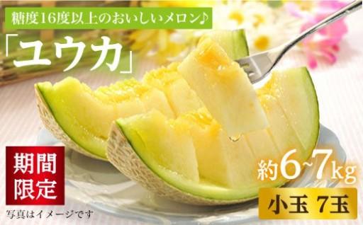 限定8/12まで!こだわりの栽培で糖度16以上!大島メロン