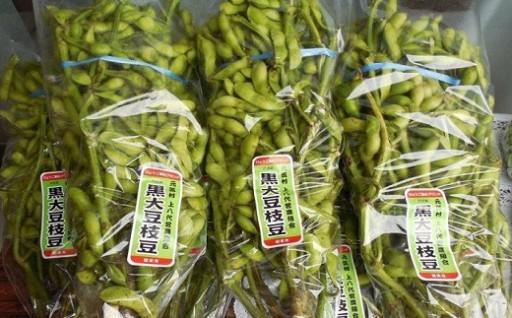 風味・コク・甘さが自慢!朝来産の丹波黒枝豆(枝付き2kg)