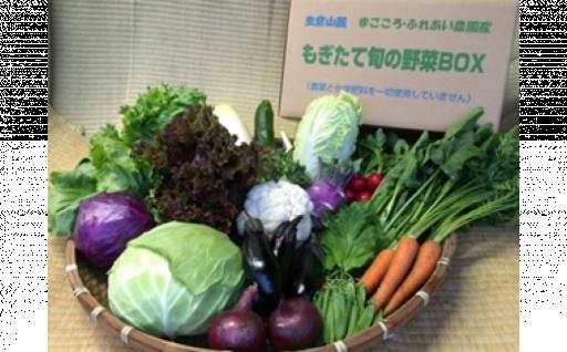 【夏に美味しい野菜の詰め合わせ】旬の野菜セット Mサイズ