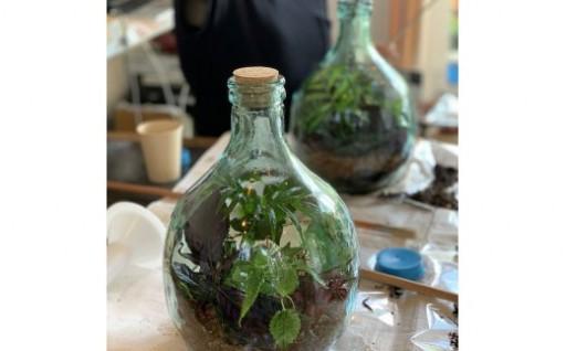 飾って楽しめる テラリウム 観葉植物