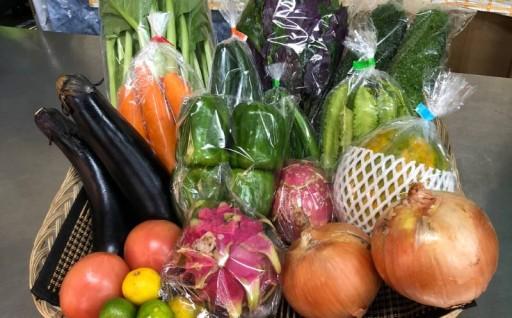 【定期】3ヶ月お届け 県産の野菜・フルーツ詰め合わせセット
