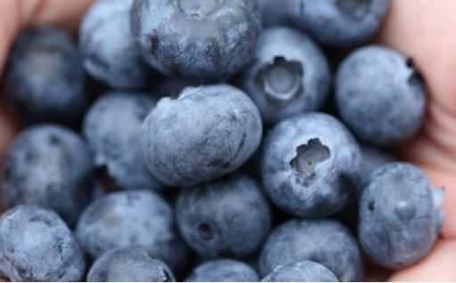 有機栽培の冷凍ブルーベリー が新たに登場しました!