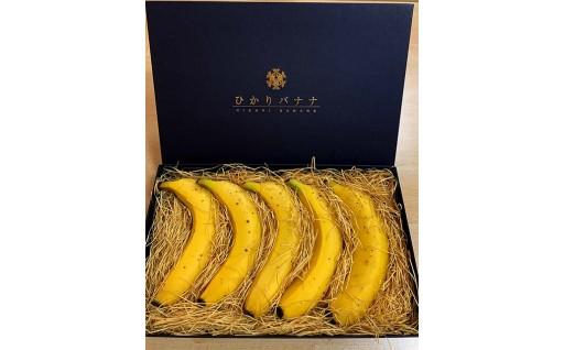 【予約受付中】奇跡のバナナ「ひかりバナナ」です